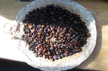 ethiopia_coffeebean.jpg